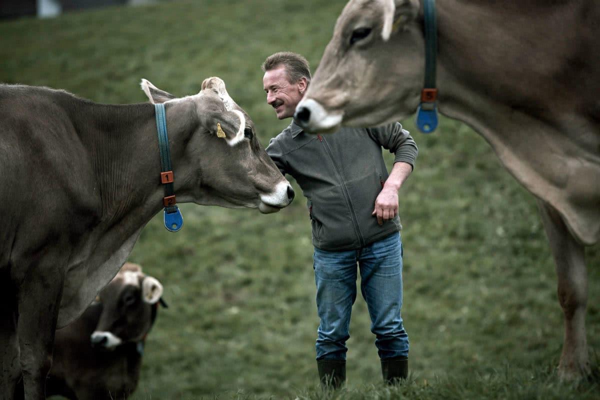 Willi Schmid auf Du und Du mit den Kühen